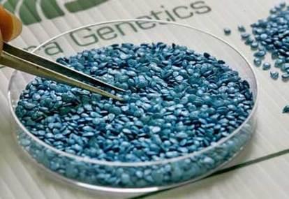 Seed GMO